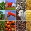 Inversión en Materias Primas ante la inflación que viene